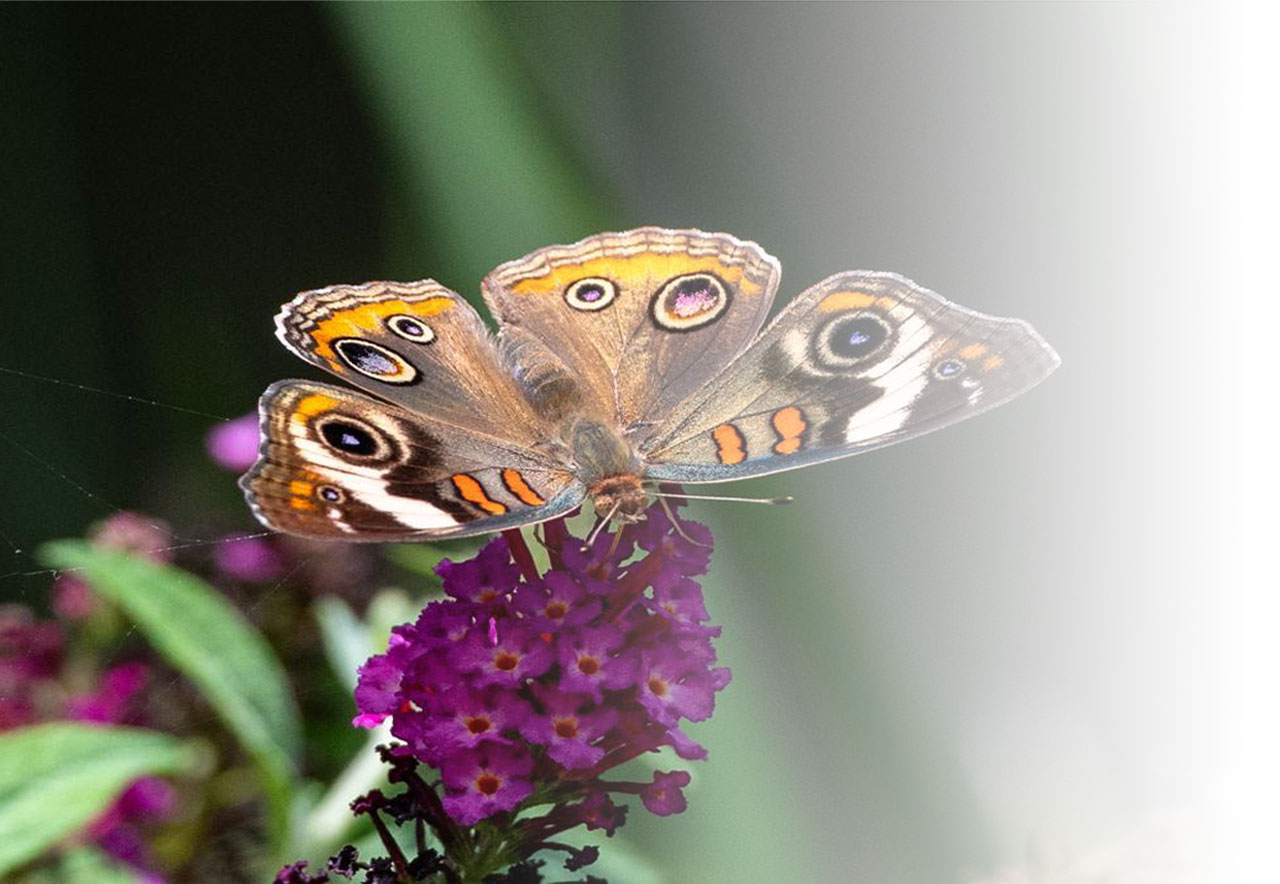 environment air quality butterfly